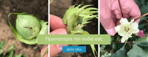 πρασινο σκουληκι, λυγκος, καταπολεμηση, φυτοφαρμακα